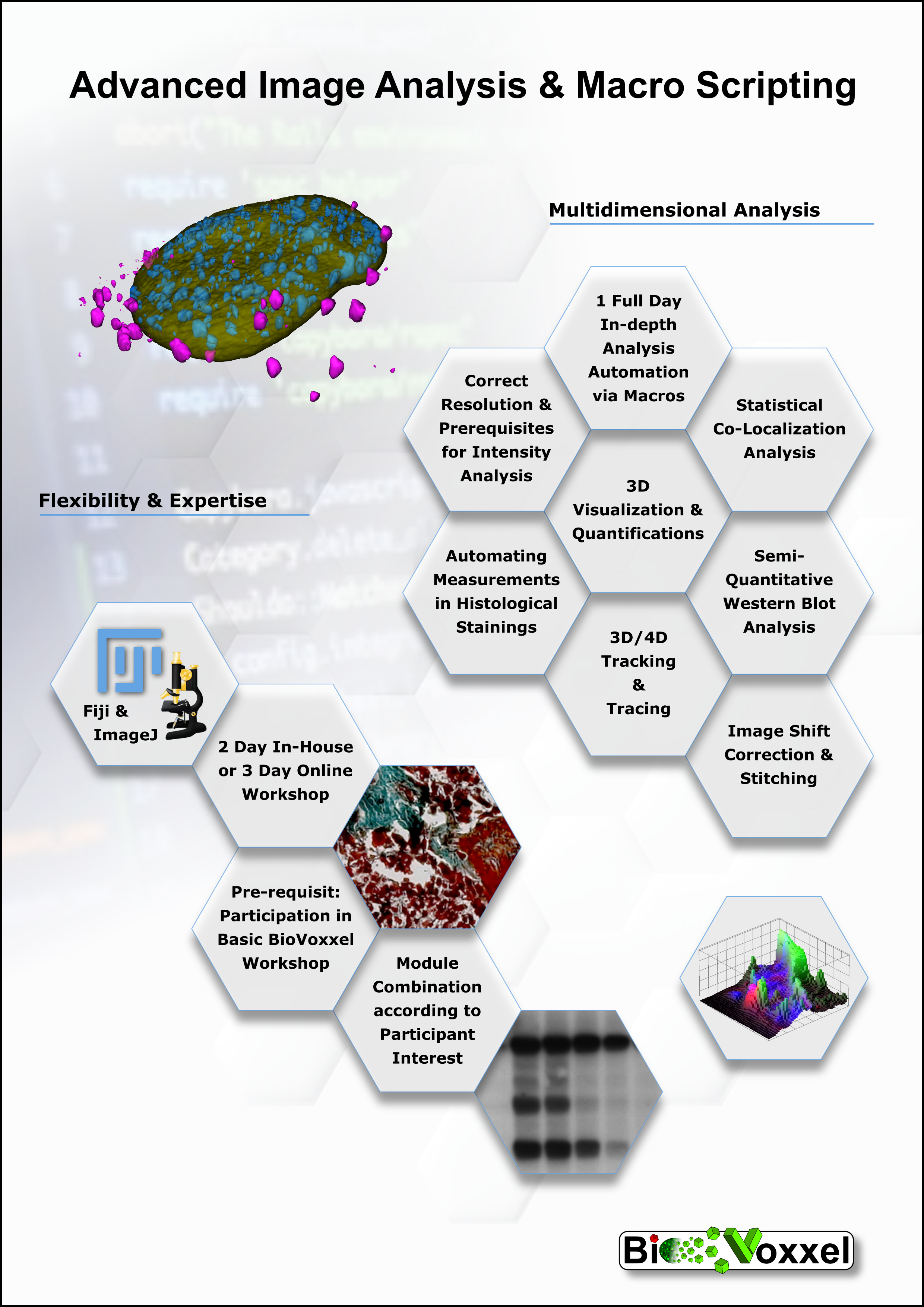 BioVoxxel Workshop - Macro Scripting and Advanced Image Analysis